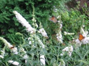 estación de mariposas llevandome a la emoción