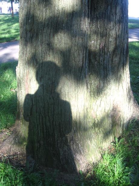 IMG_4154 arbol con sombra carmen váscones