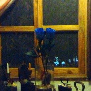 Carmen vàscones y rosas azules en casa 2015