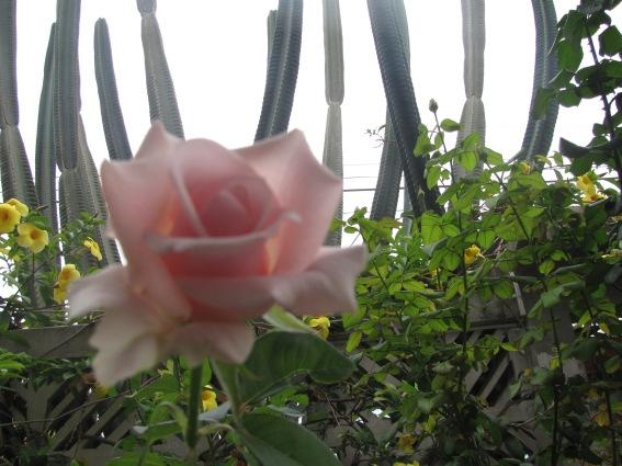 rosa y catus, foto de carmen váscones