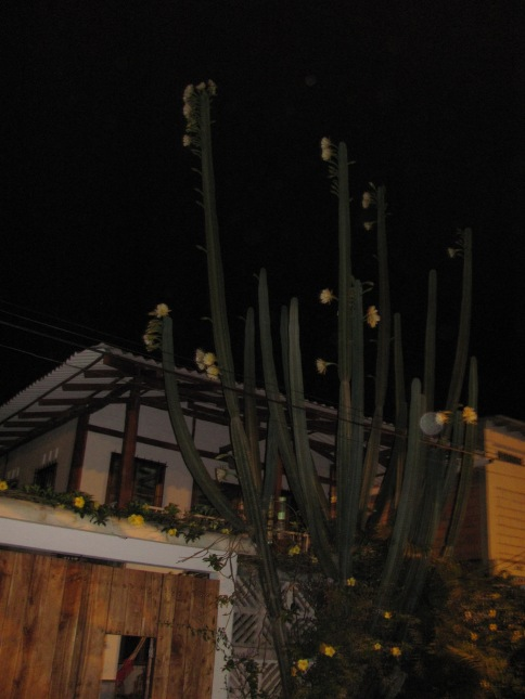 Cactus noviembre 2013, 011