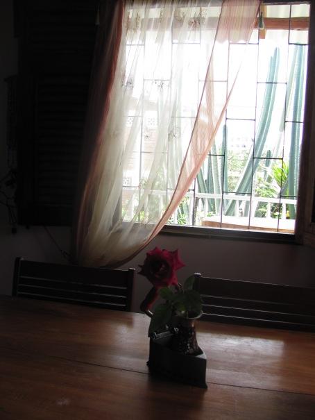 La Rosa 021, fotografía de carmen váscones